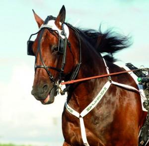 Maharajah nominerad till Årets Häst 2011